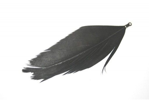 Peacock Feather with End Black 75mm - 4pcs