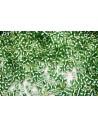 Perline Delica Miyuki Sparkling Lined Light Green 11/0 - 8gr