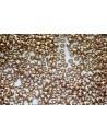 Miyuki Seed Beads Duracoat Galvanized Champagne 11/0 - Pack 50gr