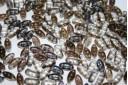 Perline Cali Crystal Valentinite 8x3mm - 30pz