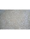 Perline Delica Miyuki Opaque Cream Ceylon 11/0 - 8gr