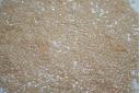 Perline Delica Miyuki Opaque Beige Ceylon 11/0 - 8gr
