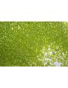 Toho Seed Beads 8/0, 10gr., Trans-Rainbow Lime Green CR8164
