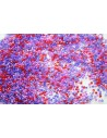 Perline Delica Miyuki Luminous Mix 5 11/0 - 8gr